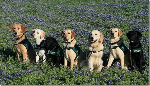 LSPR pups in blue bonnets 2012