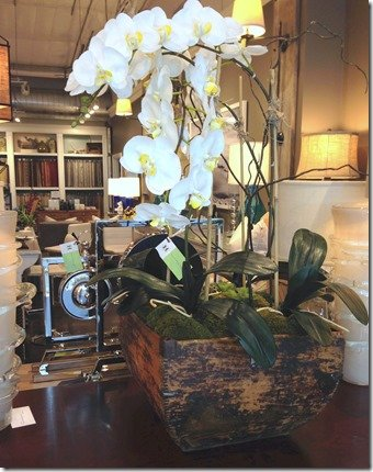 orchid in vintage rice bucket, heather scott home and design