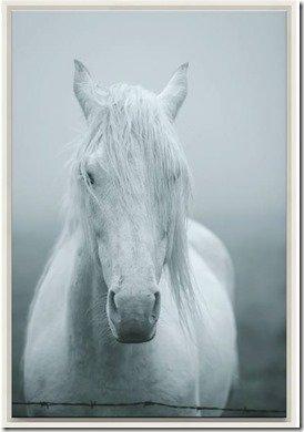 horse photograph as art